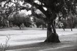 Man Climbing Tree.